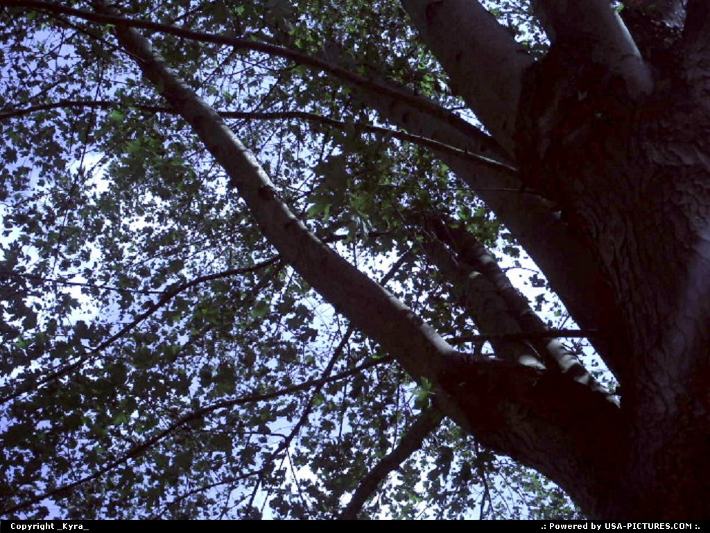 Picture by _Kyra_:OceanaW-virginiasky, blue, tree, up, green, autum, shade