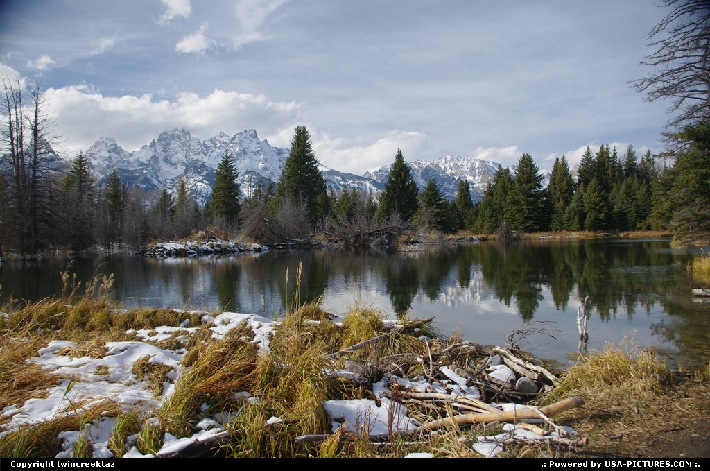 Picture by twincreektaz: Moose Wyoming   Tetons, River,, Wyoming